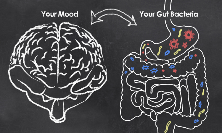 the gut and mood connection